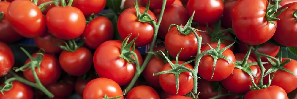 Tomatenhandel loopt in de soep